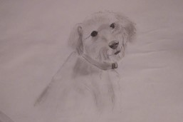 Drawing 2: Pepper, my dog at home
