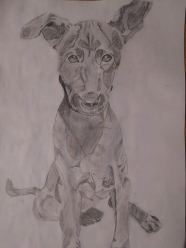Drawing 6: A dog in Cambodia
